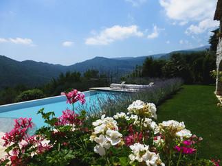 Pool thru geraniums.jpg