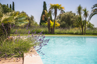 Rise lavender & pool.jpg