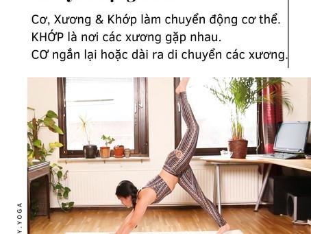 Chuyển động cơ xương khớp trong Yoga