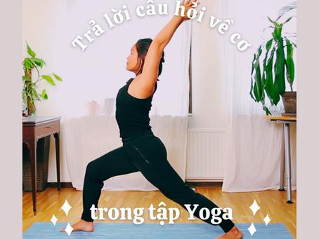 Tập Yoga có giúp làm cơ to lên hay nhỏ đi?