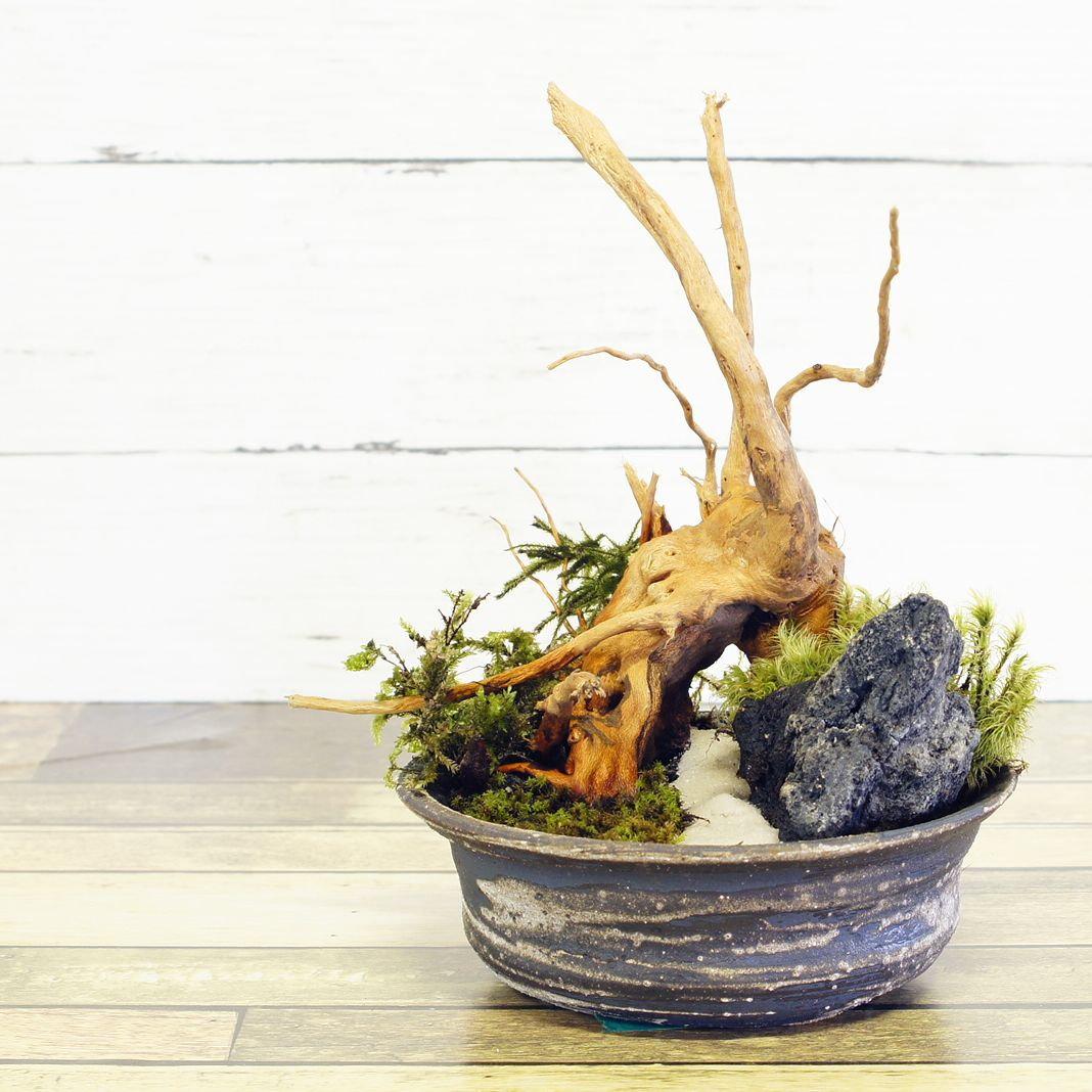 プレゼント用の製作にもおすすめ! 信楽焼の苔盆景製作体験