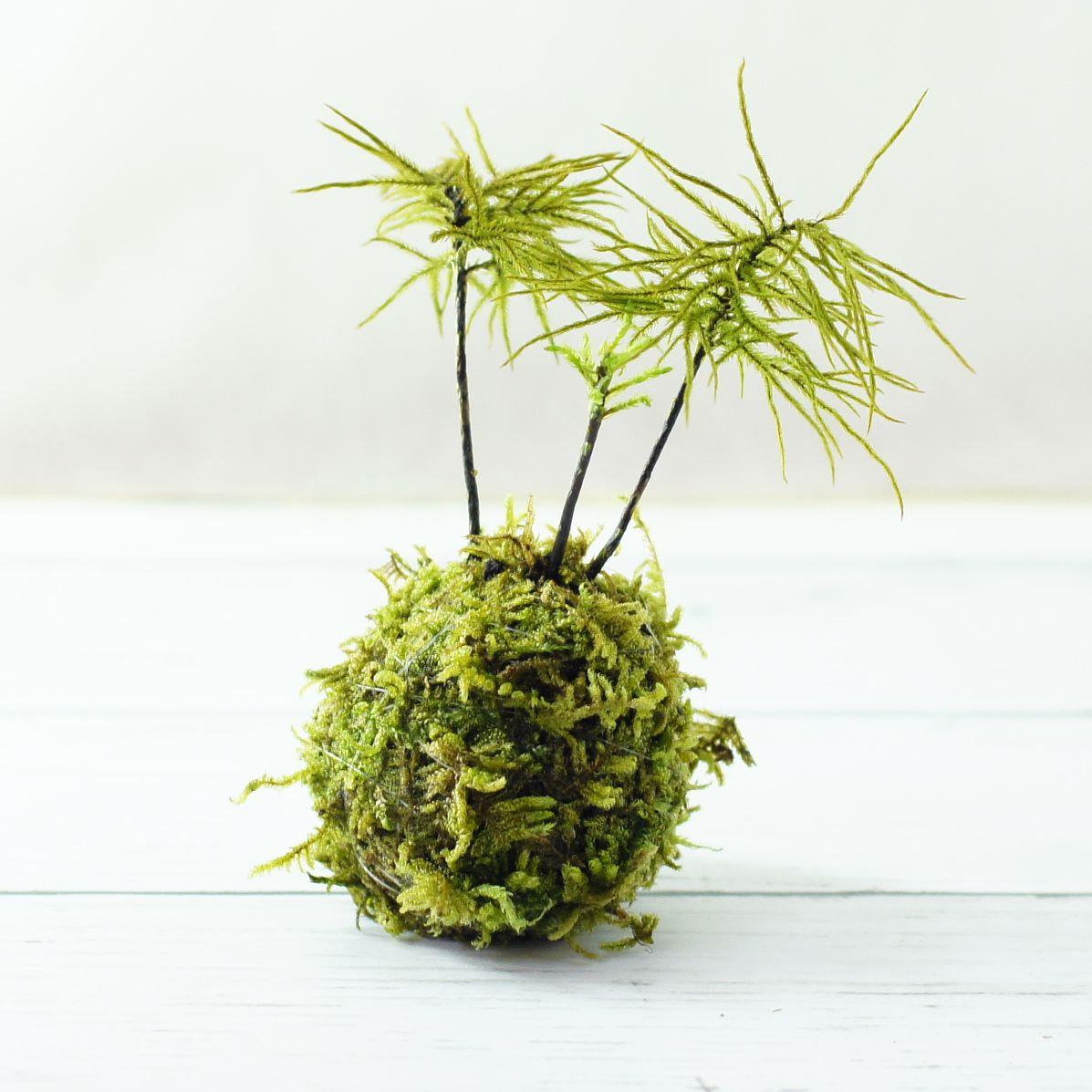 苔玉の製作体験