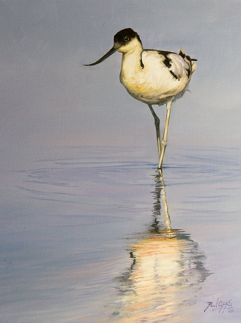 Avocet - Mounted Print - Includes UK Shipping
