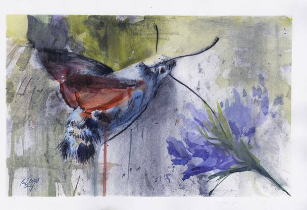 Hummingbird Hawk Moth - SOLD