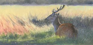 Fallow Deer at Richmond