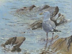 Herring Gull -SOLD