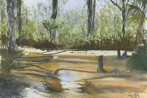Florida Swamplands