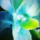 Screen Shot 2019-09-25 at 10.05.08 AM.pn