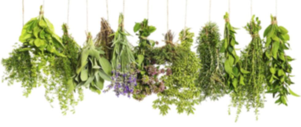 herbs & botanicals.jpg
