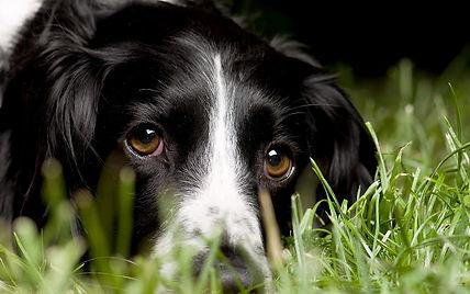 hd-honden-wallpaper-portret-foto-van-een