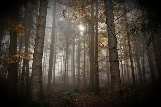 autumn_fog_colorful_leaves_nature_landsc