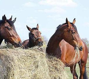 HOMEBANNER_paarden1.jpg