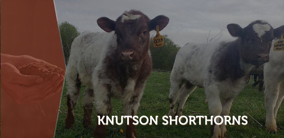 Knutson Banner2.jpg
