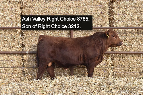 Ash Valley Right Choice 3212 (5 Straws)
