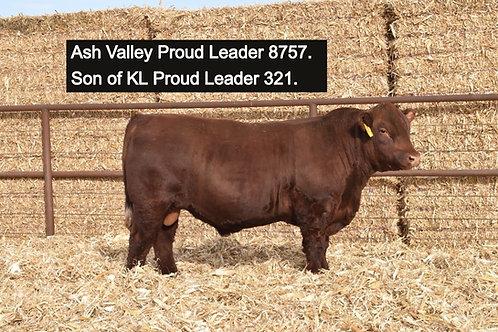KL Proud Leader 321 (5 Straws)