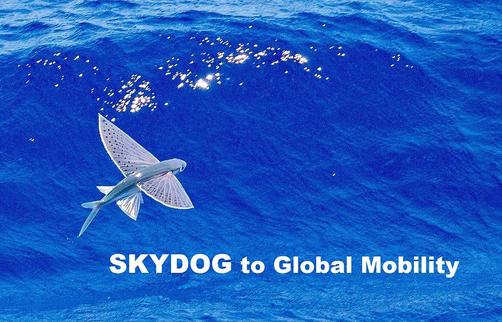flying fish-skydog-.jpg