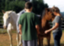 equine assisted therapy