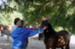 equine assisted therapy exercise