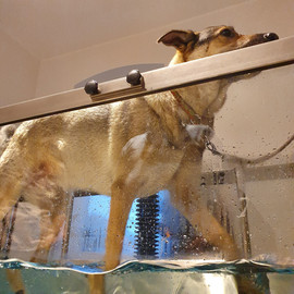 Aquatraining für Hunde