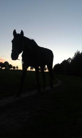 Ein langes und gesundes, glückliches Pferdeleben...!