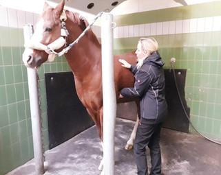 Allgemeincheck Pferd