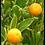 Thumbnail: Óleo Essencial Bergamota 5ml Phytoterapica