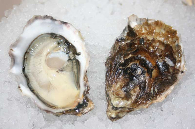 Barron Point Oysters