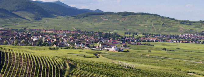 An Evening with the Wines of Alsace