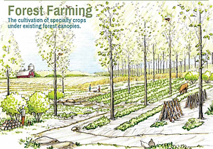 Forest Farming.png