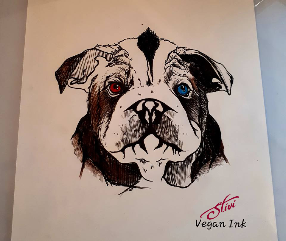 Wall eyes bulldog