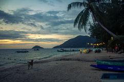 A Dog, A Beach, and a Sunset