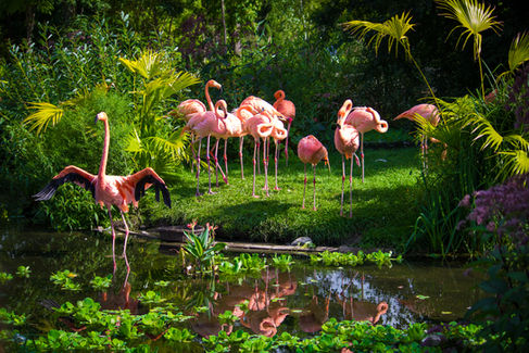 Flamingo Paradise