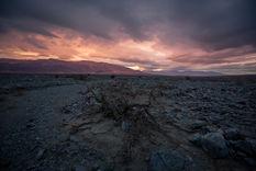 Dry Bush Sunset