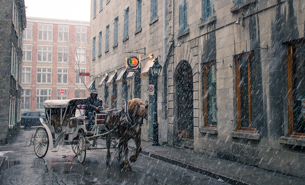 Montreal Horse Carriage during snowstorm