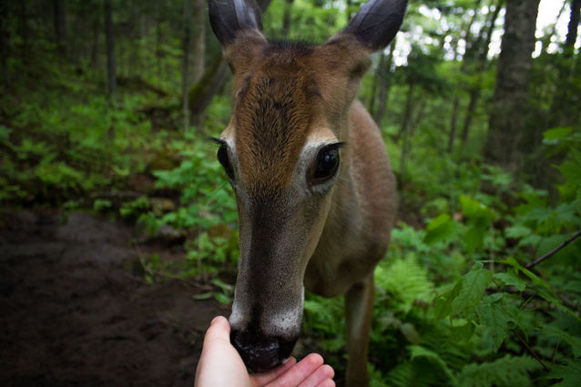 A Friendly Deer