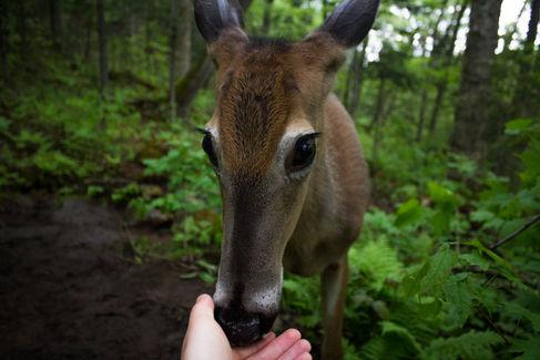A Friendly Deer