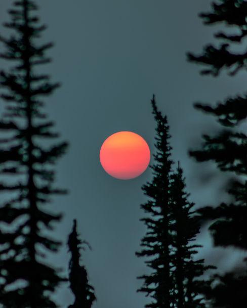 Orange Sunset Planet with Trees