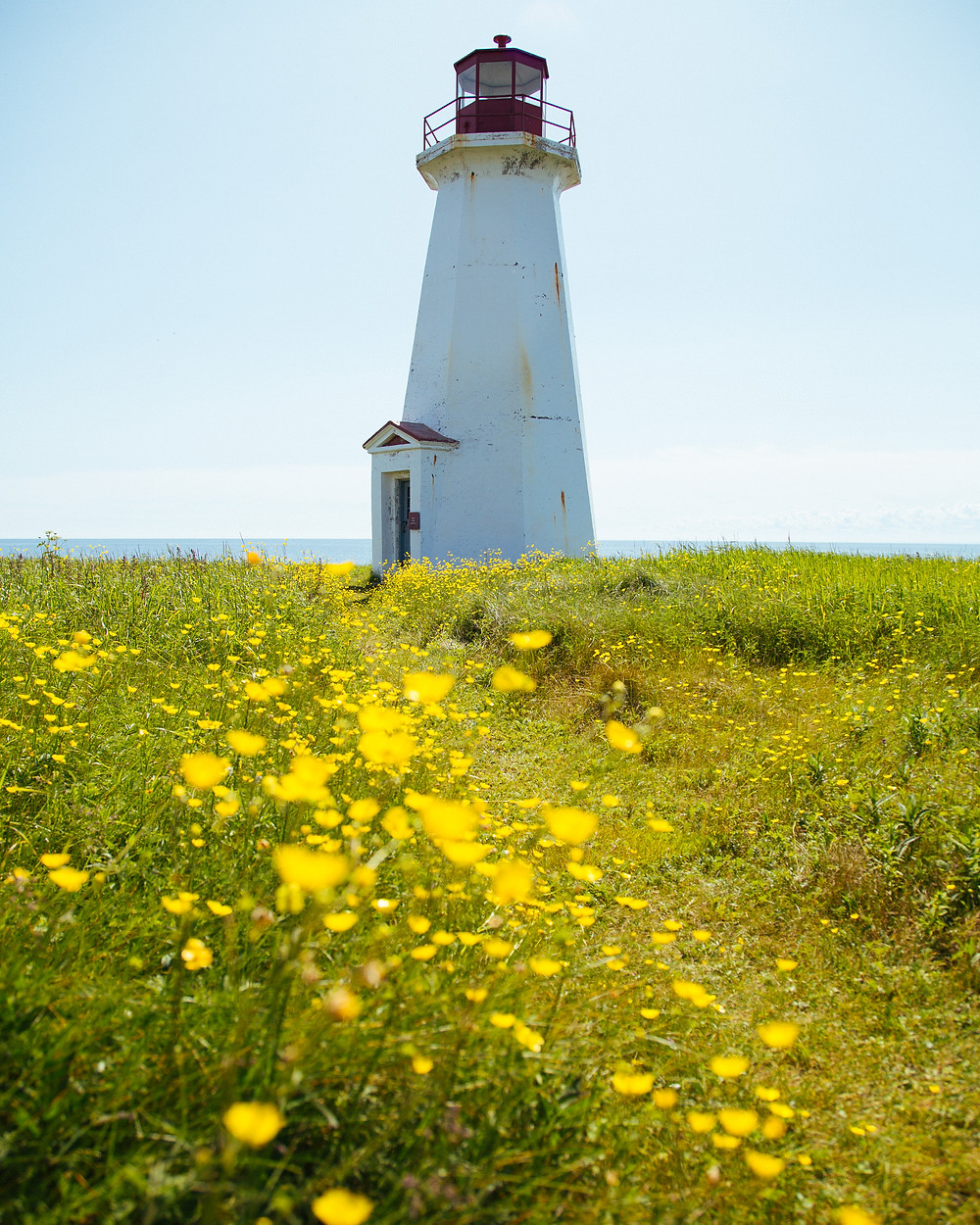 Petite Île au Marteau Lighthouse with Flowers Yellow