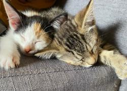 Rayne & Misti