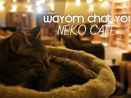 Neko cafe Wayòm Chat yo.