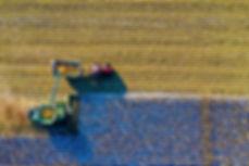 Farming.jpeg