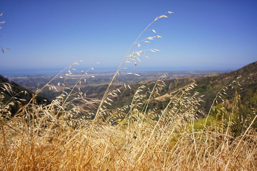 Santa Barbara Best Chiropractor