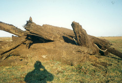 Vue de Brière (9)