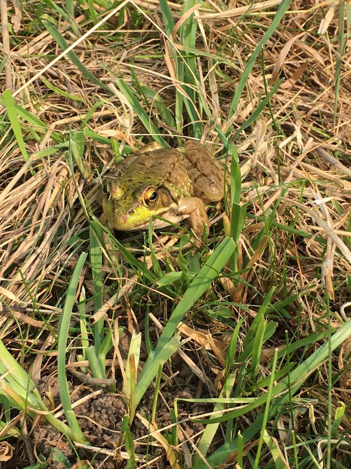Holliston Toad