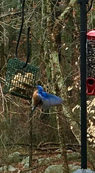 Ah, Bluebird!