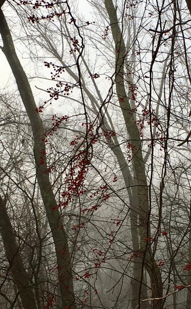 Cranberry Fog