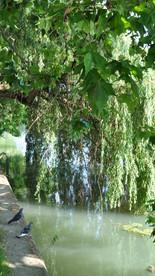 1. impacter le moins possible le patrimoine paysager existant des bords de Marne