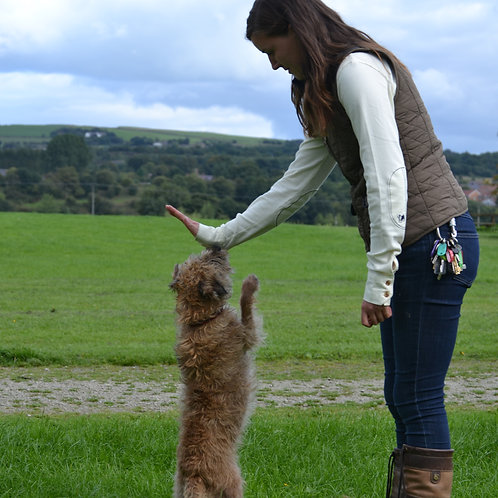 ISCP Certified Dog Trainer Diploma Course