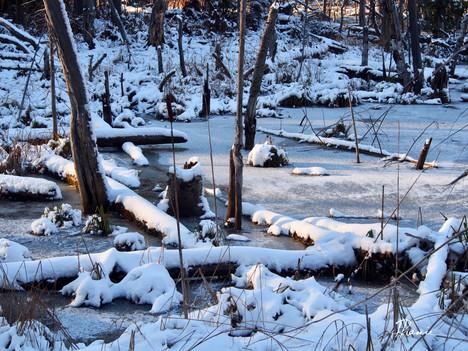 Les premiers jours d'hiver