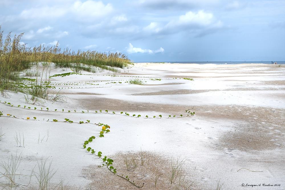Beautiful Gasparilla Beach near Sarasota, Florida - on the Gulf of Mexico.
